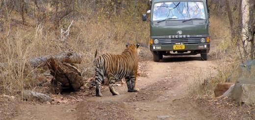 wildlife-holidays-in-india