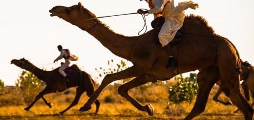 camel festival bikaner rajasthan